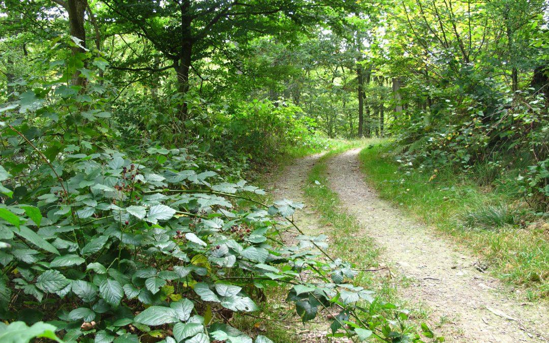 """""""Aufbrechen"""" – dreitägige spirituelle Wanderungen"""
